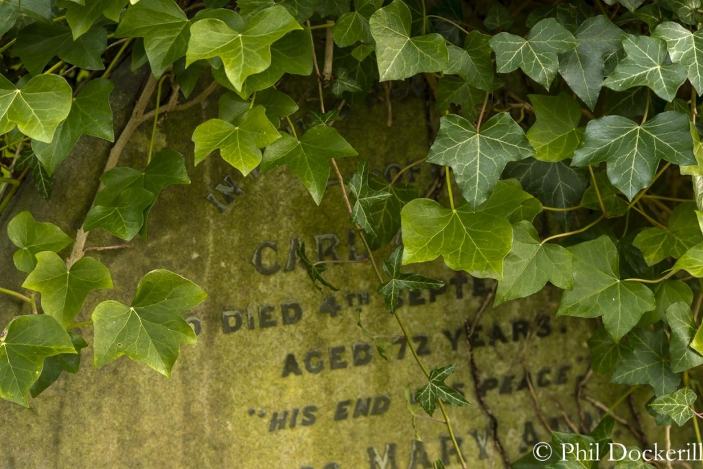 Picture of Ivy over a headstone in Highgate Cemetery
